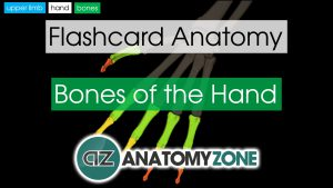 Bones of the Hand Anatomy
